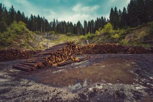 what is deforestation definition
