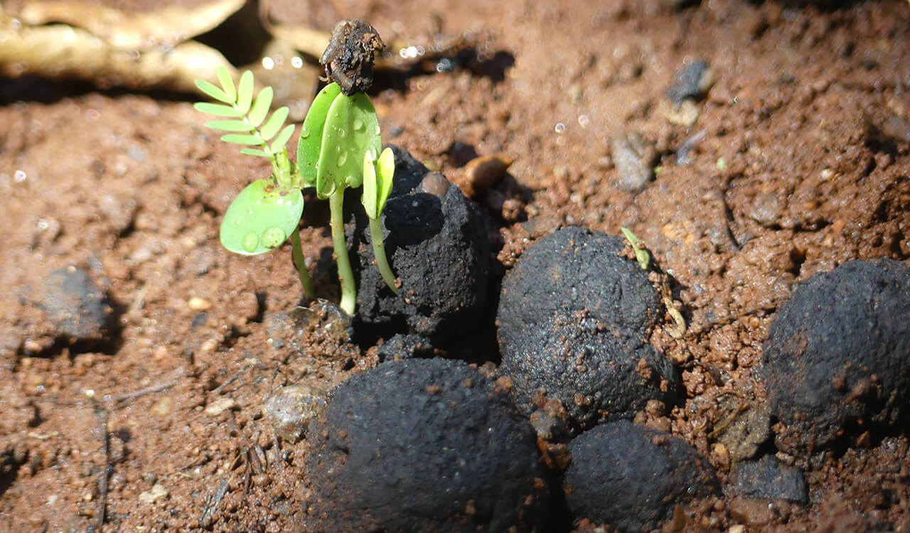 Activated Charcoal For Plants
