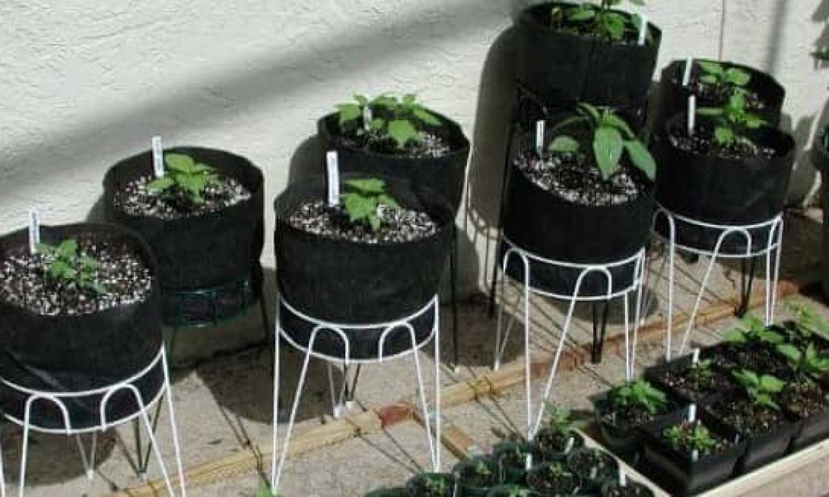 Grow Bags for Marijuana and Vegetables