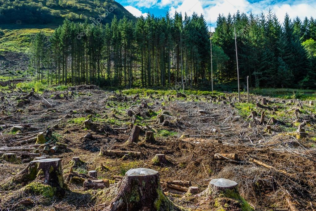 How Deforestation Affects The Carbon Cycle?