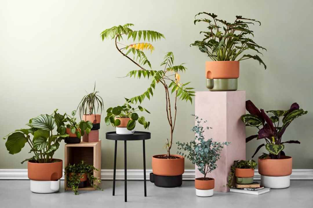 problems-with-self-watering-pots