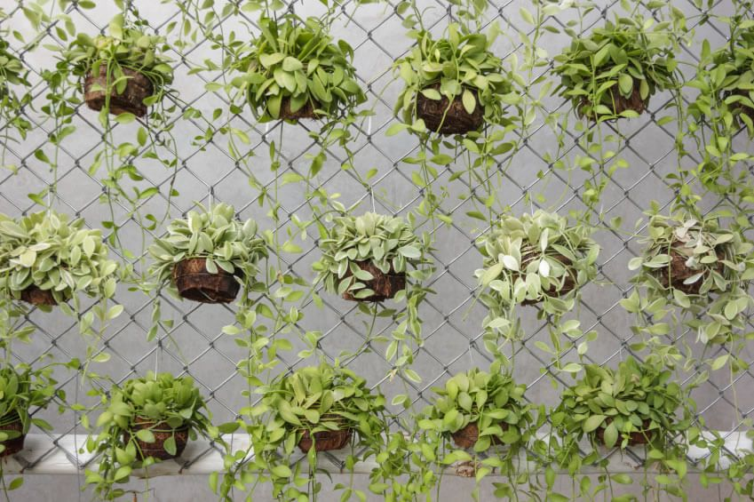 Chain Link Fence Planters