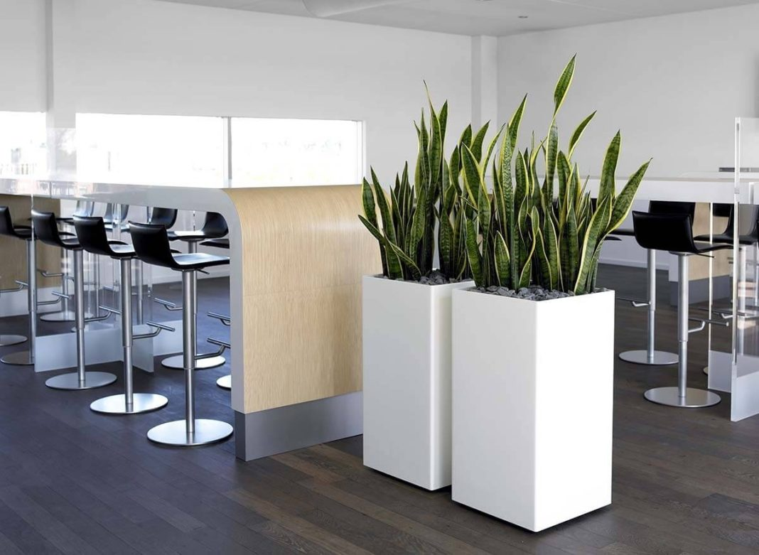 Extra Large Indoor Planters