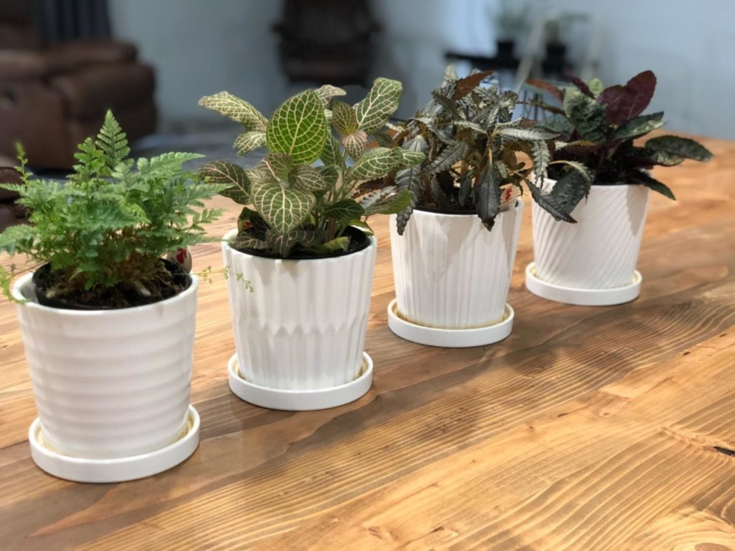 Indoor Planters With Drainage